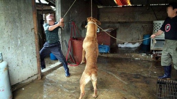 Quick links to share the petition: Prosecute Romanian man for slaying his dog! | Yousign.org