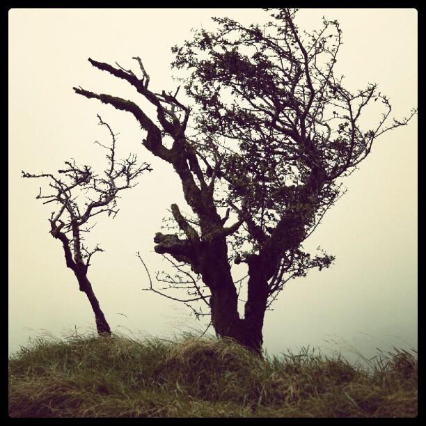 #Dartmoor #Tree