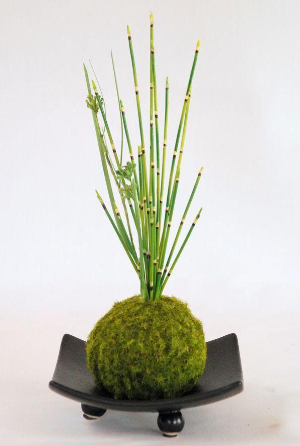 les 430 meilleures images du tableau terrariums kodedama and moss gardens sur pinterest. Black Bedroom Furniture Sets. Home Design Ideas