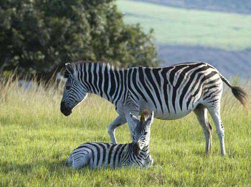Wildlife at Karkloof Safari Spa (www.karkloofsafarispa.com)