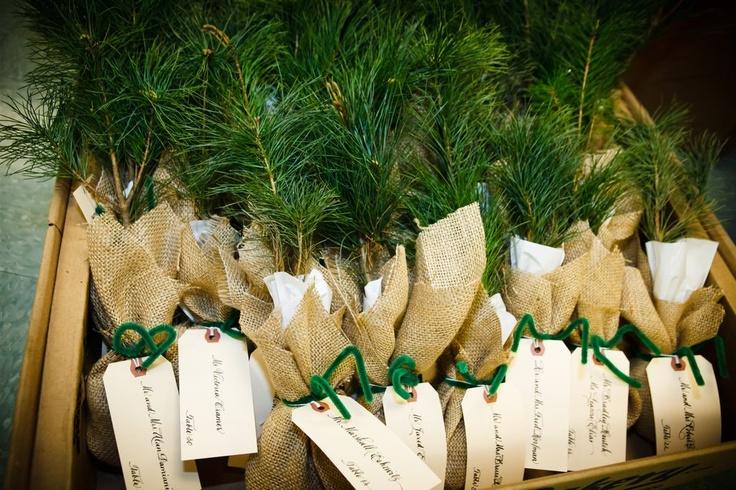 pine tree escort   card