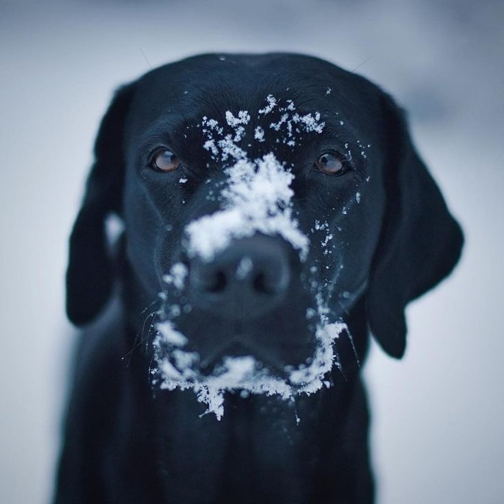 What?!! You don't bury your nose in the snow to wake up?