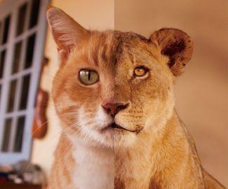 岩合光昭写真展 ネコライオン