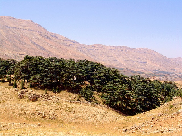The Cedars of God is a small forest of about 400 Lebanon Cedar trees in the mountains of northern Lebanon. They are among the last survivors of the extensive forests of the Cedars of Lebanon that thrived in this region in ancient times. The Cedars of Lebanon are mentioned in the Bible over 70 times. The ancient Egyptians used its resin in mummification and King Solomon used the famous trees in the construction of the First Temple in Jerusalem.