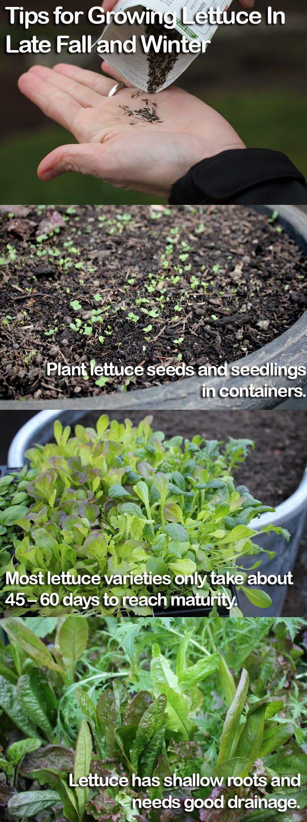 best gardening images on pinterest vegetable garden apartment