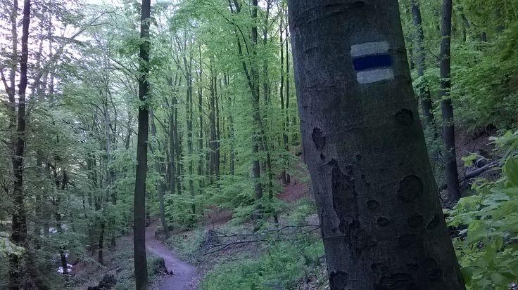 Blue tourist sign./Modrá turistická značka.