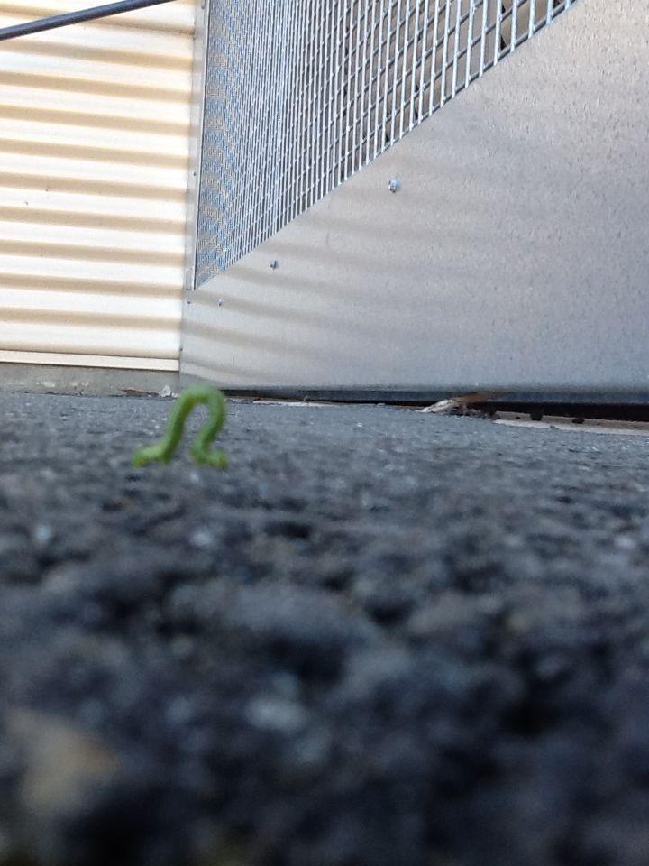 its a green caterpillar, cute #cute #greencaterpillar