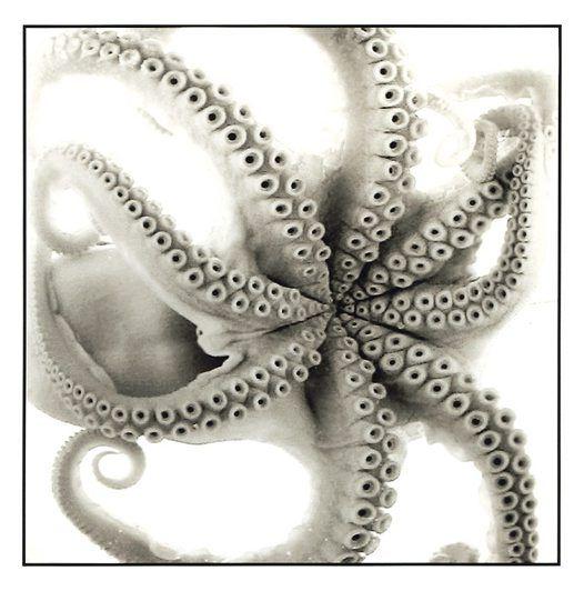 octopoda:    Photographer: Jan Huisken.