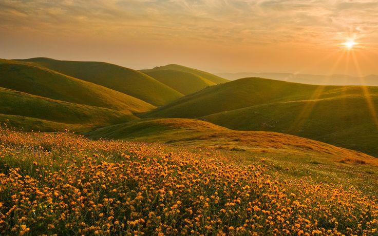 цветы, холмы, пейзаж, Сьерра-Невада, Калифорния, закат, солнце
