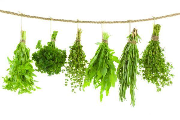 Tartósítsd a gyógynövényeket!