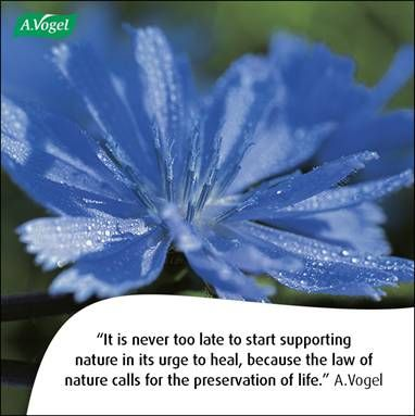 It is never too late to start supporting nature in its urge to heal, because the law of nature calls for the preservation of life. A.Vogel