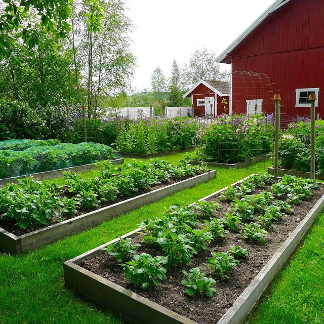 Vegetable Garden Design, Garden, Cottage Garden