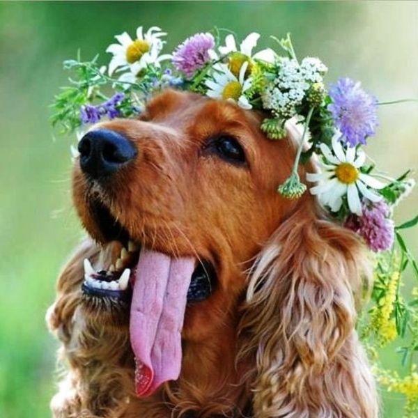 dog-nature-names