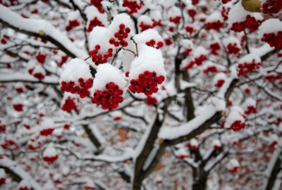 snow covered: Mothers Earth, Start Post, Beautiful Photography, Snow Covers, Beautiful Things, Winter Beautiful