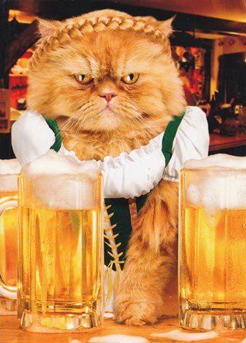 cat beer bottle animal - photo #8