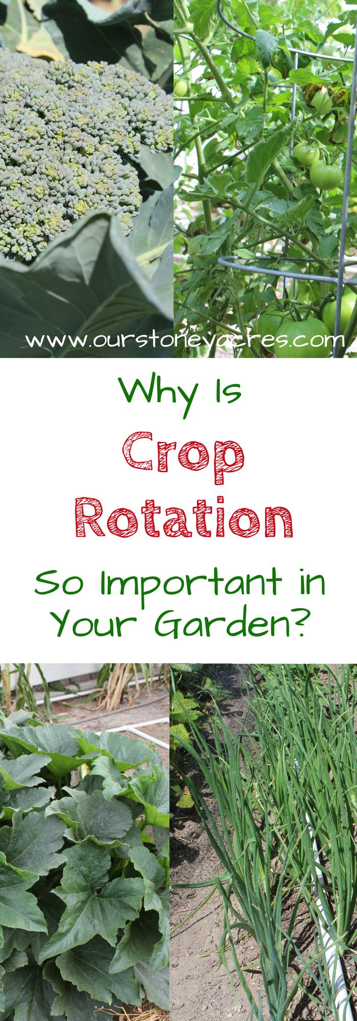 Importance of Crop Rotation - Crop Rotation in the home garden is an important principal that is often ignored. This post will teach you why garden crop rotation is so important!