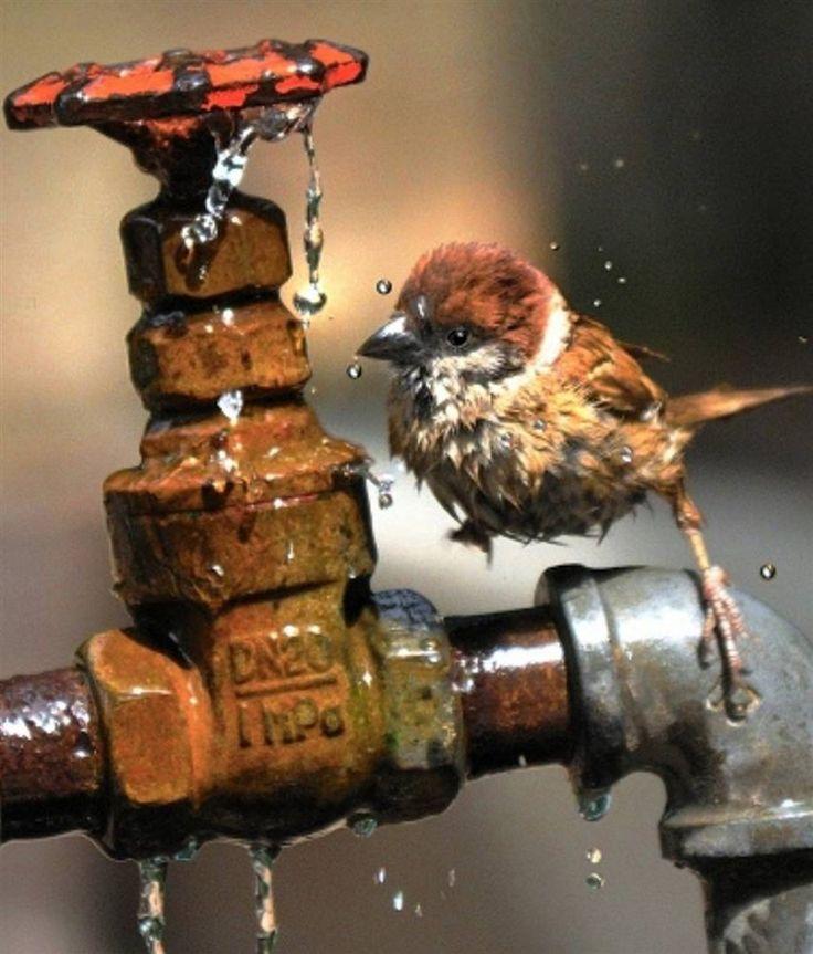 SparrowAnimal Pics, Water Parties, Little Birds, Bird Baths, Cute Animals, Shower, Birds Bath, Bath Time, Cutest Animal