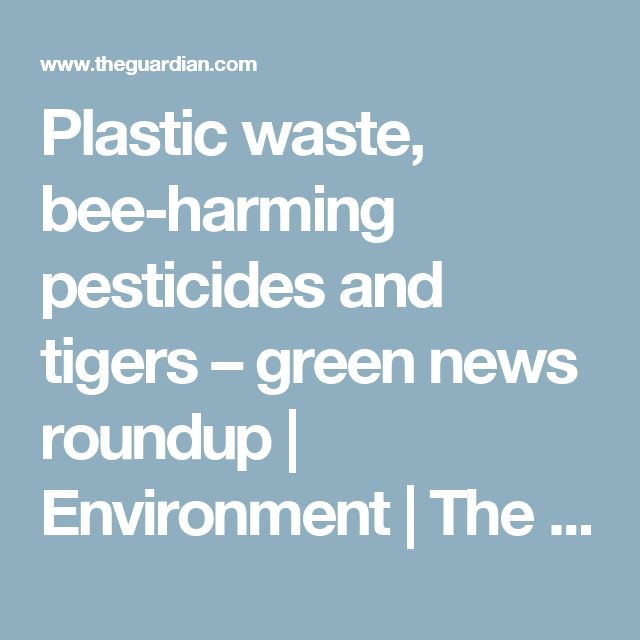Plastic waste, bee-harming pesticides and tigers – green news roundup | Environment | The Guardian