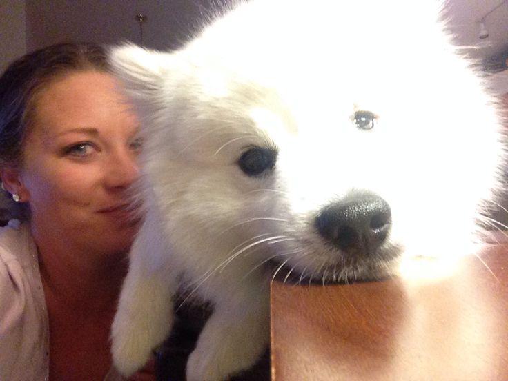 myjackie American eskimo, Dogs