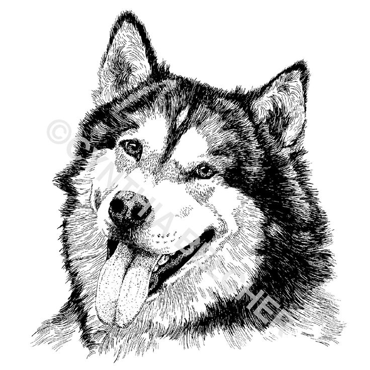 24 best Pen and Ink images on Pinterest