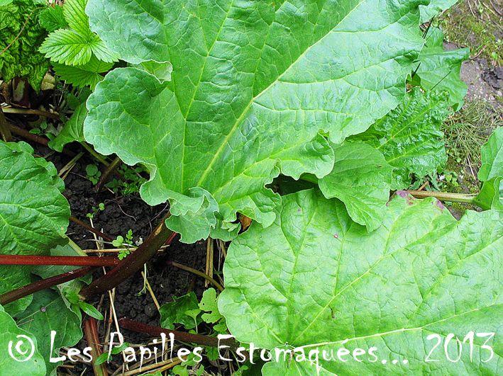 Les 15 meilleures id es de la cat gorie plante herbac e - Ou planter la rhubarbe dans le jardin ...