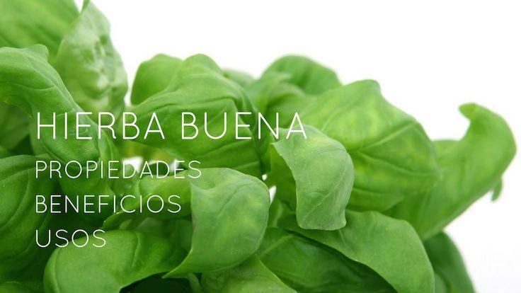 La hierbabuena es una poderosa planta medicinal que puede traer muchos beneficios a nuestro organismo.
