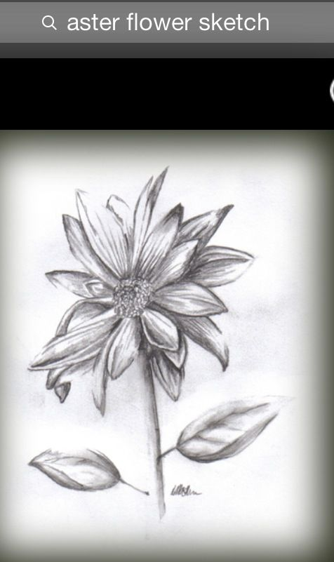 6f1e309fb Aster Flower Drawing Tattoo - Same Day Flower Delivery