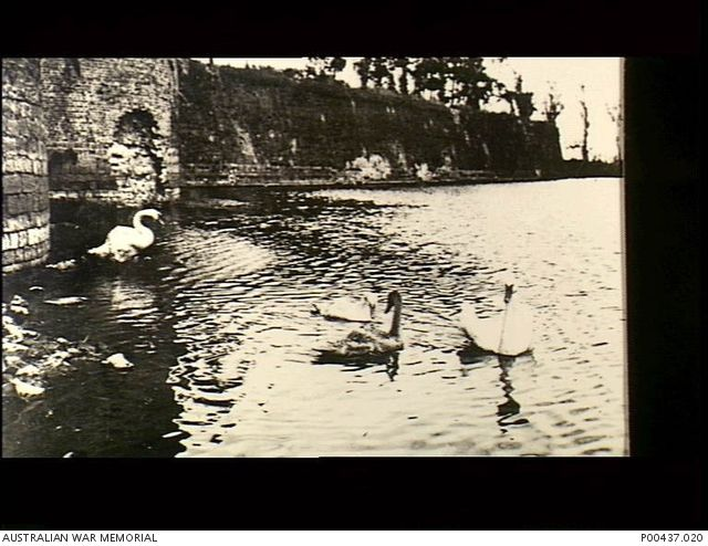 WWI, Ypres, France. 1917. Swans which would have survived many different forms of bombardment, swim in the river beside the ramparts on the river banks. (Original album housed in AWM Archive Store)