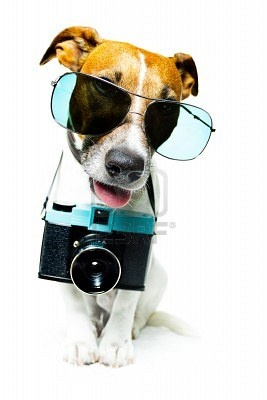 Wanna take picture with me?: Stockings Photos, And Or Pets, Animal With Cameras, Animal And Or, Dennings Fotoapparat, Pictures, Amazing Photos, Fave Photos, Adorable Animal