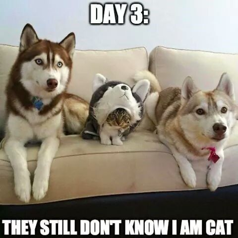 33 Funny Cat Memes That Never Fail to Make Us LOL - Cheezburger - Making interne...