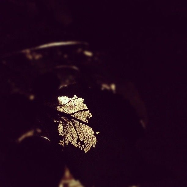a leaf in the night
