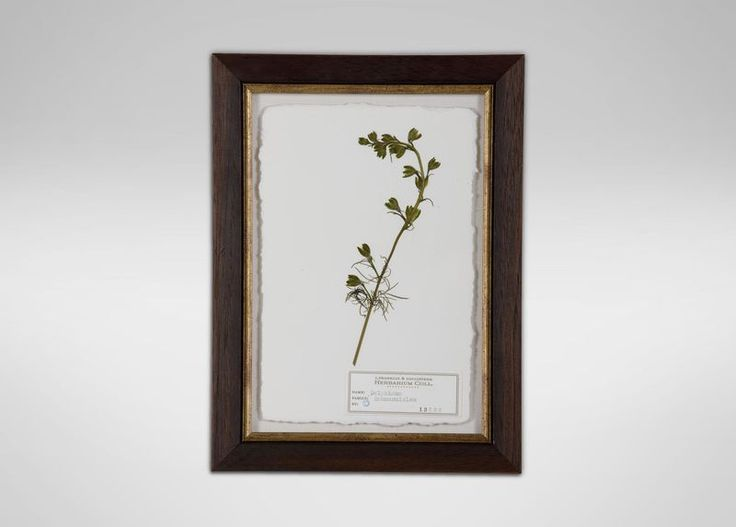 The beauty of nature is exquisitely expressed in this classic botanical artwork showcasing genuine hand-pressed flora. The carefully preserved plant is mounted on white deckle-edge archival paper, and