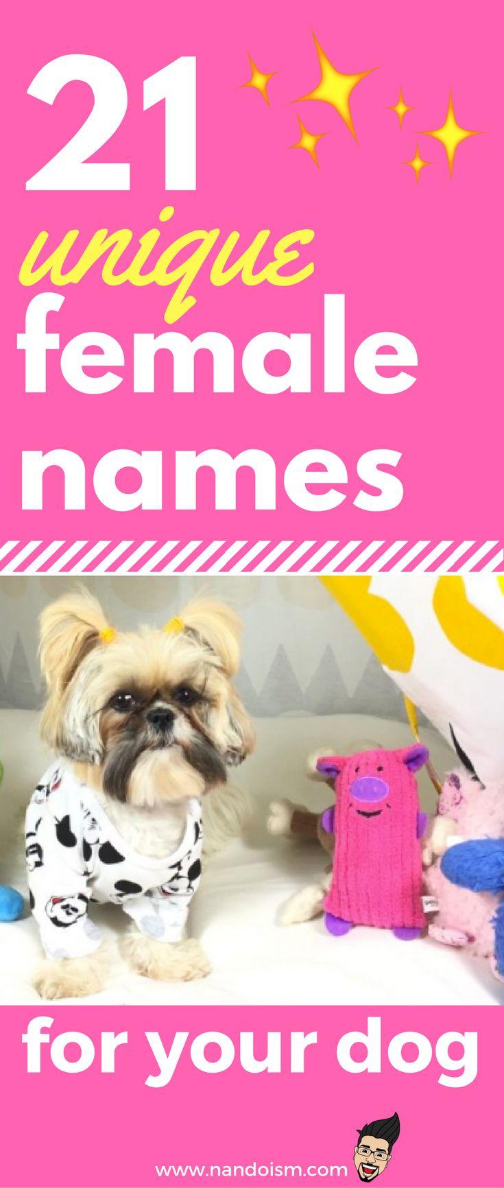Best 25 Cute female dog names ideas on Pinterest