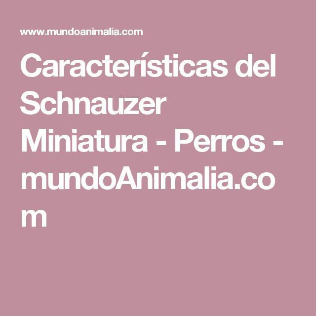 Características del Schnauzer Miniatura - Perros - mundoAnimalia.com