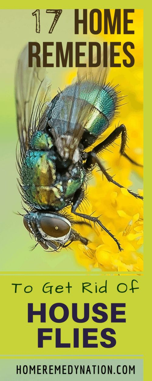 17 Unfailing Home Remedies To Get Rid Of House Flies Efficiently And Fast