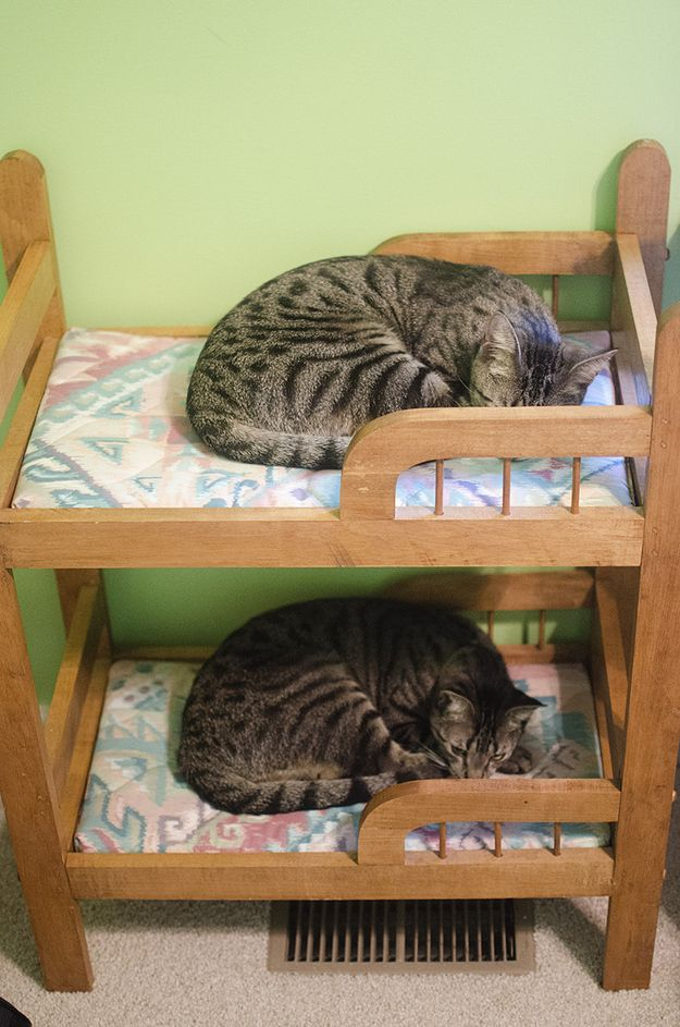 Twin cats who have discovered a tiny novelty bunk bed. | 50 Animal Pictures You Need To See Before You Die