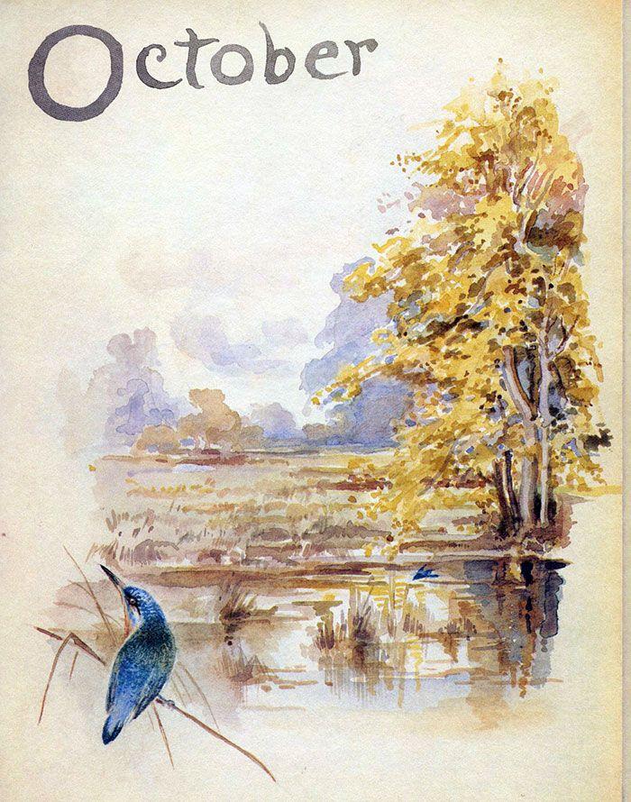 Bluebird, glowing Elm, October 1905 ~ Edith Holden