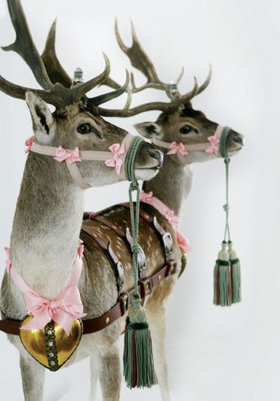 If you're going to have taxidermy might as well make it worth the while........