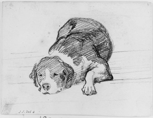 """""""Dog"""" John Singer Sargent. Graphite on off-white wove paper. Harvard Art Museums/Fogg Museum, Gift of Miss Emily Sargent and Mrs. Francis Ormond in memory of their brother, John Singer Sargent; their gift to the Fogg Art Museum, 1931."""
