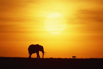Kenya. Looking at wildlife doesn't get any more exciting than this exotic honeymoon spot!
