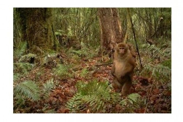 New Monkey Species Identified From Its Unusual Penis And Scrotum | IFLScience