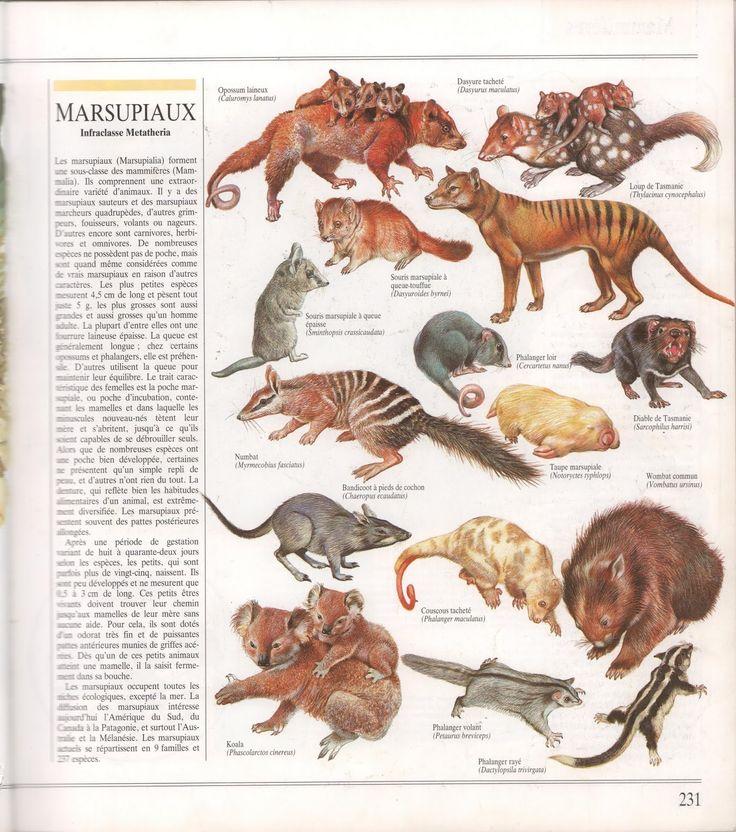 Mammifères (Encyclopédie du monde animal)