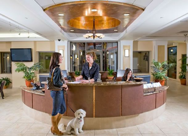 9 Things To Look For At Pet Friendly Hotels