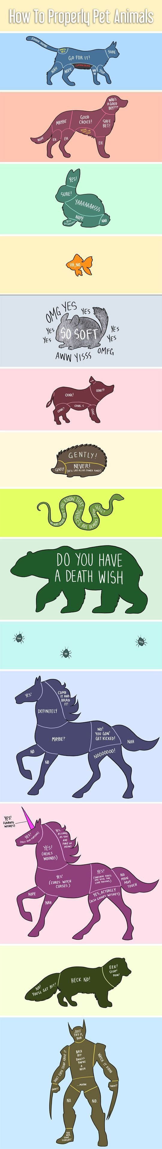 Petting animals is a science. -D do you have a death wish? Although my cats seem to love belly rubs.