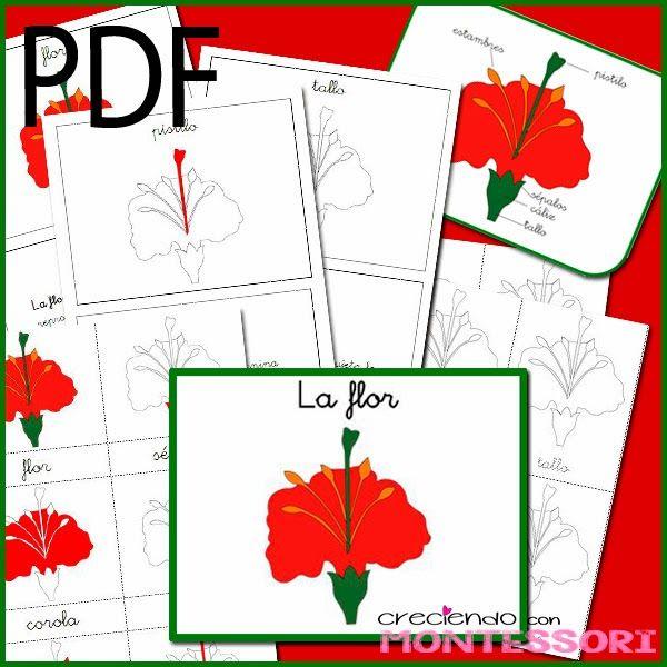 Botánica Montessori - La Flor - Imprimibles gratis - Creciendo con Montessori