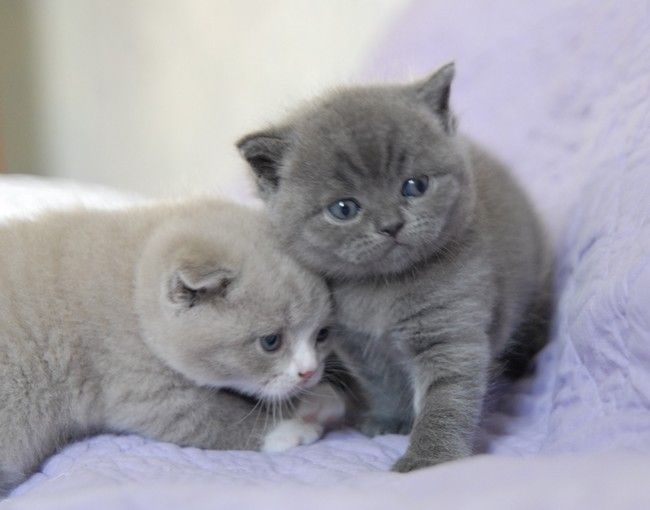 """* * KITTEN ON LEFT: """" Somes times yoo justs can'ts helps humans, yoo justs cant's."""""""