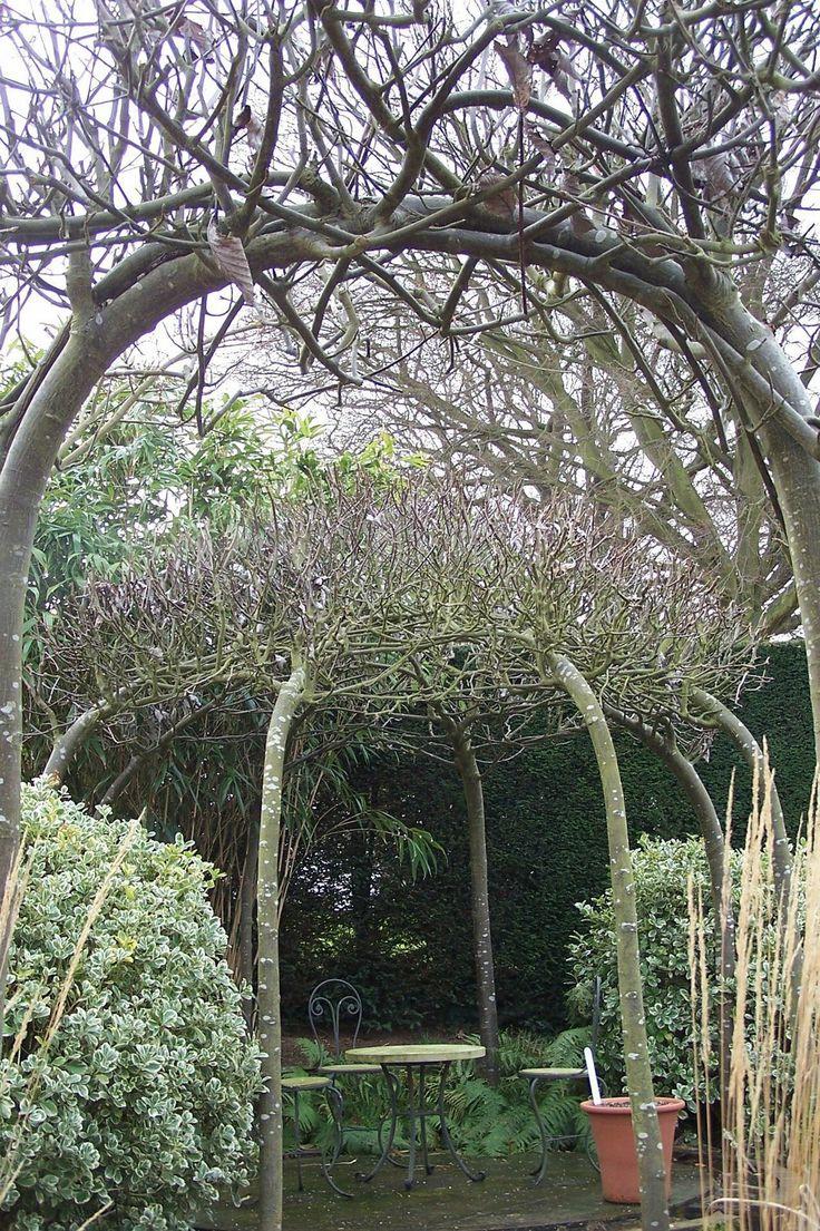 https://i.pinimg.com/736x/c2/db/f5/c2dbf534a64fb2ed98222a934ea65dde--garden-arbor-zen-garden.jpg