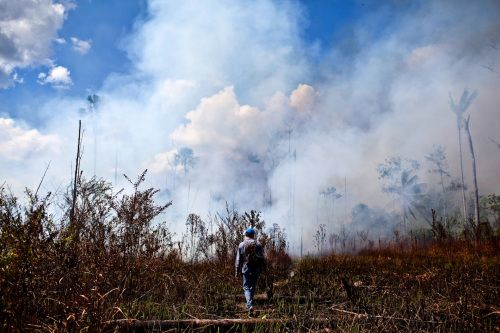 Forging fire resilience on Amazon forest fringes in Peru | CIFOR Forests News Blog