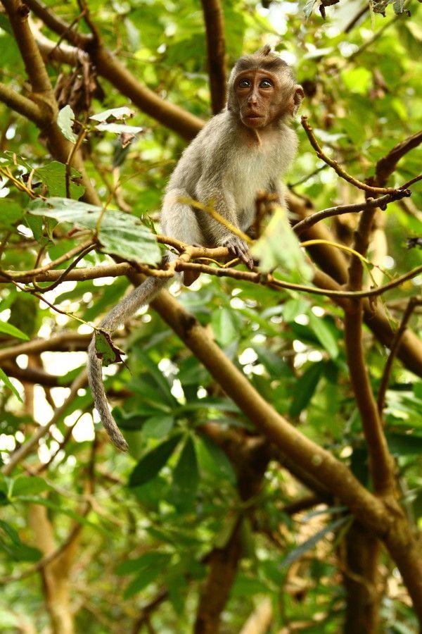 Little Monkey by Felipe Contreras on 500px