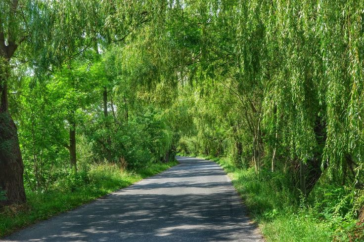 cesta mezi rybníky Bezruč a Křivý rybník